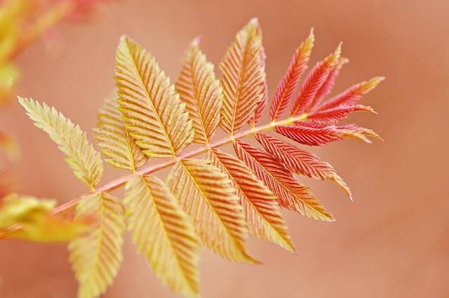 Twig Leaf Foliage - Free photo on Pixabay (172480)