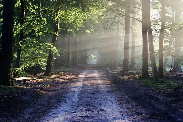 The Road Beams Path - Free photo on Pixabay (173383)