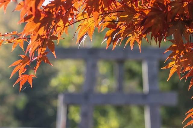 Japan Maple Leaf Red - Free photo on Pixabay (173539)