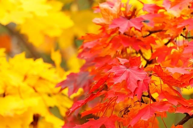 Abstract Autumn Background - Free photo on Pixabay (173657)