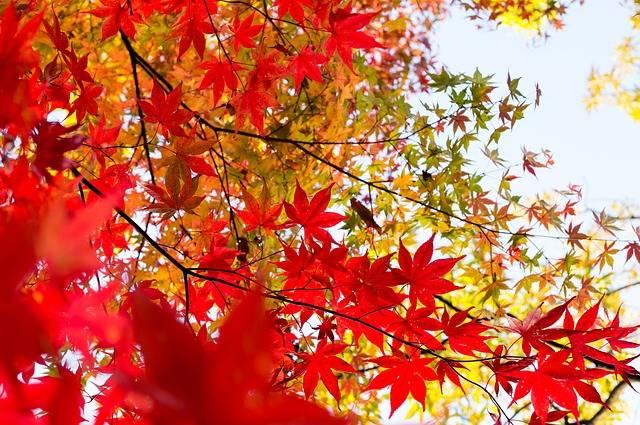 Plant Foliage Japan - Free photo on Pixabay (174017)