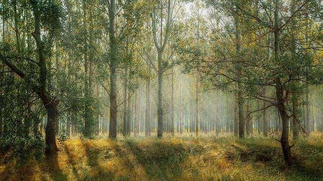 Green Park Season - Free photo on Pixabay (175599)