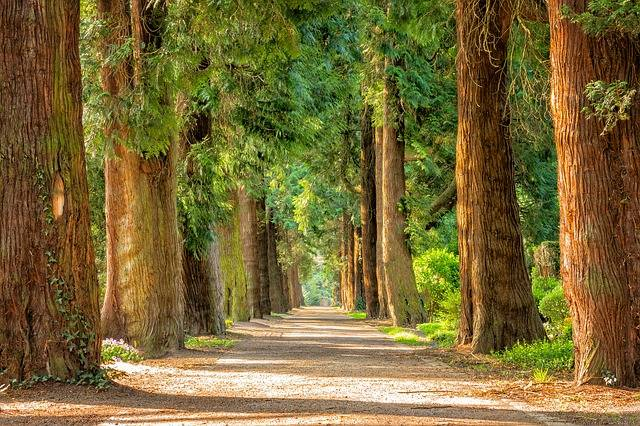Avenue Trees Away - Free photo on Pixabay (175600)