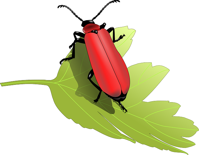 Beetle Bug Insect Leaf - Free vector graphic on Pixabay (175939)