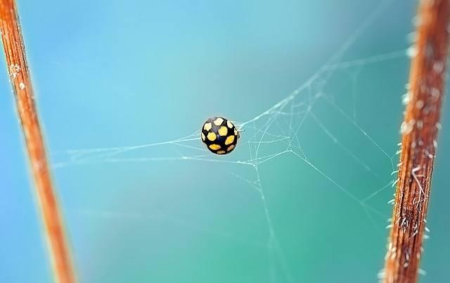 Ladybug Beetle Yellow - Free photo on Pixabay (175958)