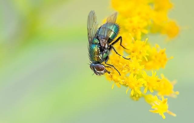 Fly Macro Nature - Free photo on Pixabay (176081)
