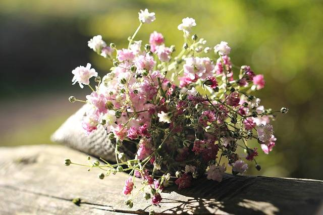 Bag Gypsofilia Seeds Gypsophila - Free photo on Pixabay (176438)