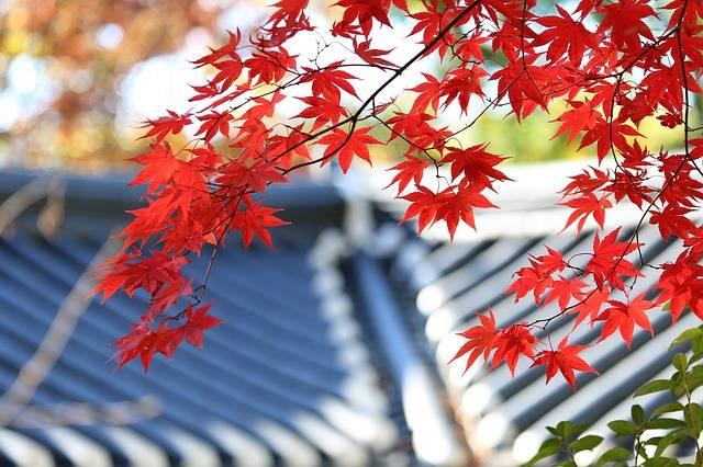 Autumn Leaves The - Free photo on Pixabay (176467)