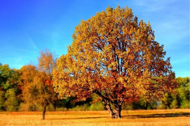 Tree Fall Colors - Free photo on Pixabay (176617)
