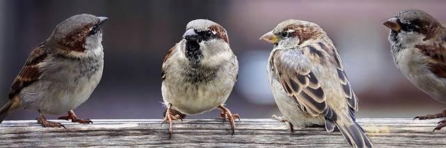 Sparrows Family Birds - Free photo on Pixabay (178318)