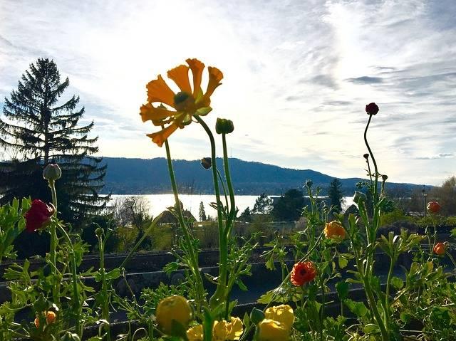 Flower Nature Summer - Free photo on Pixabay (178795)