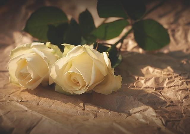 White Roses Flowers Romance - Free photo on Pixabay (178937)