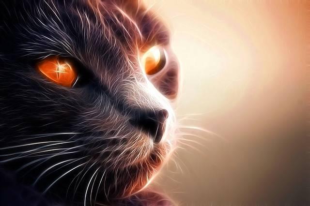 Cat Feline Pet - Free image on Pixabay (179682)