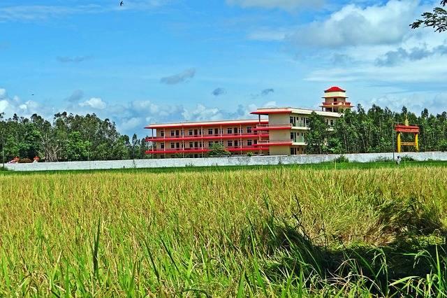 Rice Field Paddy - Free photo on Pixabay (180010)