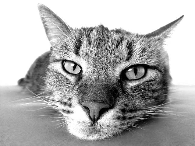 Cat Relax Chill Out - Free photo on Pixabay (181038)