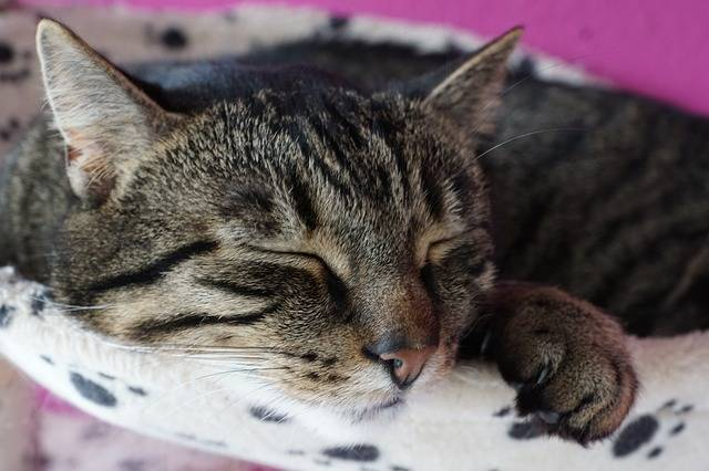 Animal Cat Cute - Free photo on Pixabay (181050)