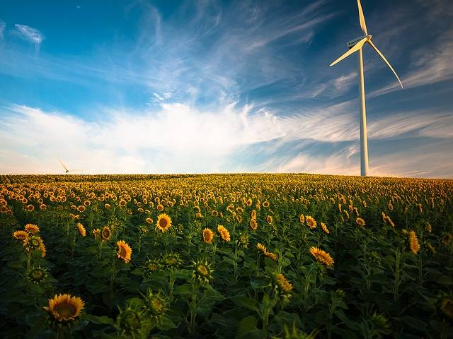 Agriculture Sunflower Field Wind - Free photo on Pixabay (181068)