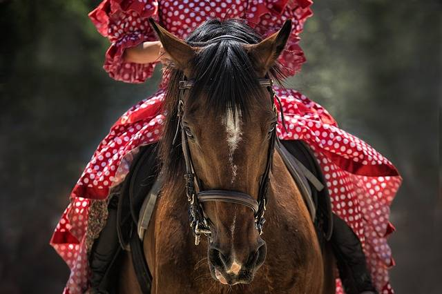 Horse Show Head - Free photo on Pixabay (181301)