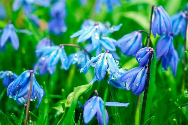 Bluebell Flowers Blue Butterfly - Free photo on Pixabay (181519)