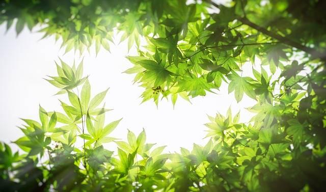 Maple Wood The Leaves - Free photo on Pixabay (181937)