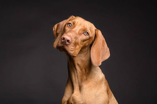 Dog Animal Portrait - Free photo on Pixabay (182170)
