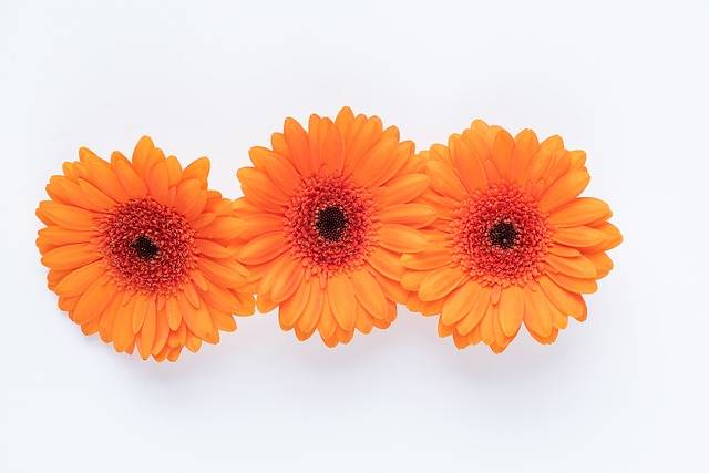 Gerbera Flowers Orange - Free photo on Pixabay (182215)