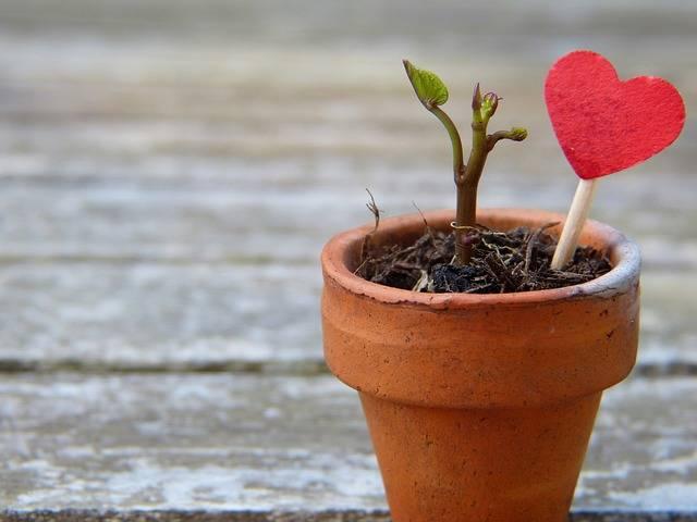 Flowerpot Engine Heart - Free photo on Pixabay (182784)