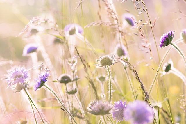 Wildflowers Field Flowers Summer - Free photo on Pixabay (184148)