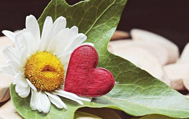 Marguerite Heart Wood - Free photo on Pixabay (186024)