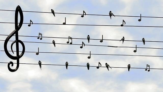 Birds Swifts Singing - Free photo on Pixabay (186573)