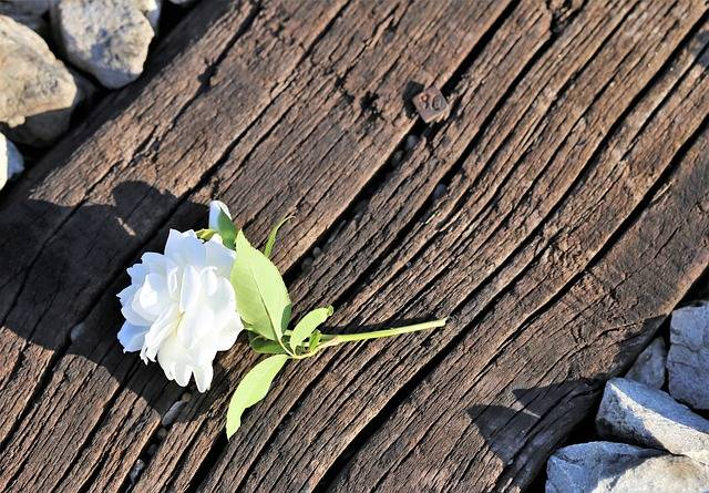 Tiny White Rose On Railway Stop - Free photo on Pixabay (188211)