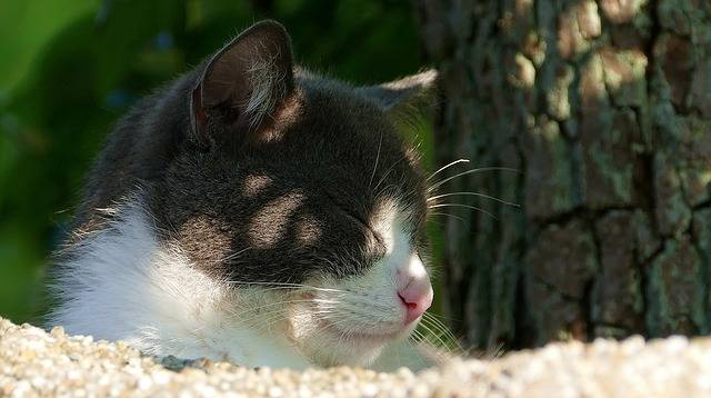 Cat Black And White Cute - Free photo on Pixabay (189006)
