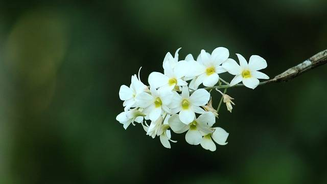 Kerala India Flower - Free photo on Pixabay (190094)