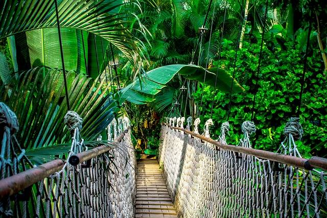 Suspension Bridge Rainforest - Free photo on Pixabay (193154)