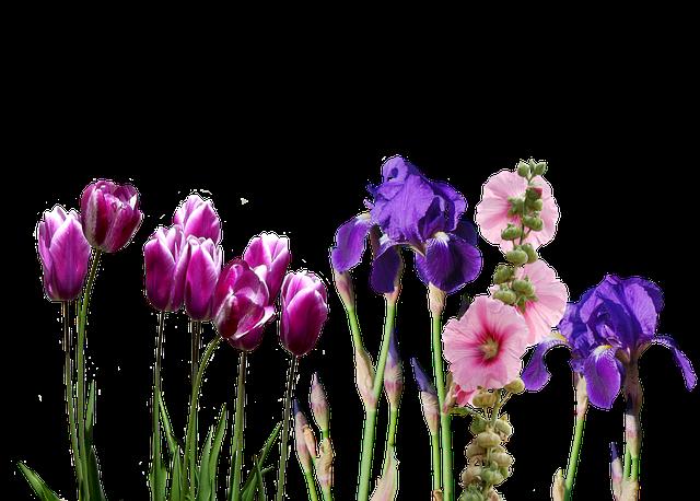 Iris Tulips Flowers - Free photo on Pixabay (195930)