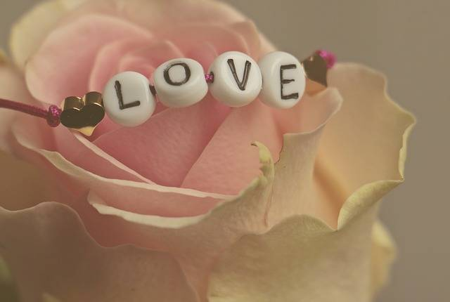 Love Rose Flower - Free photo on Pixabay (201299)