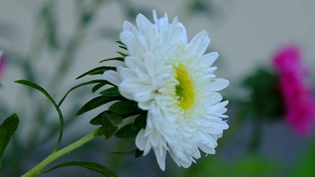 Flower White Garden - Free photo on Pixabay (202147)