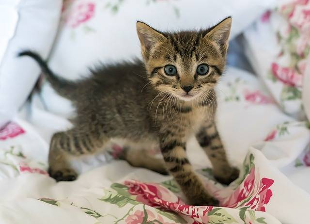 Kitten Newborn Cat - Free photo on Pixabay (203425)