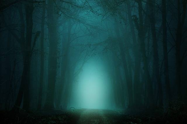 Forest Away Fog - Free image on Pixabay (204038)
