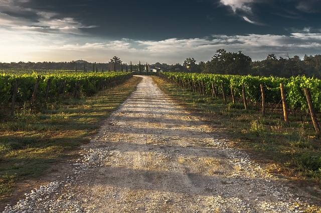 Country Lane Gravel Road Tuscany - Free photo on Pixabay (204054)