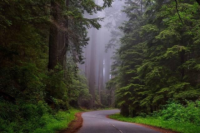 Redwood National Park California - Free photo on Pixabay (204778)