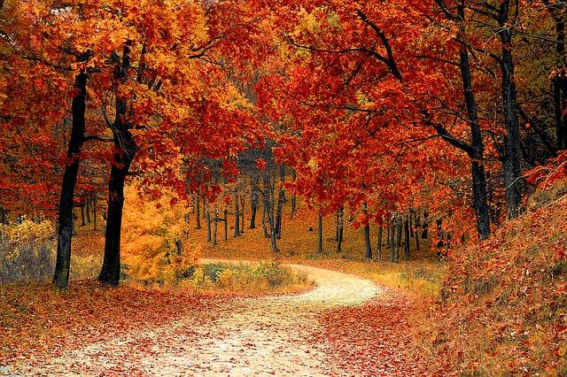 Fall Autumn Red - Free photo on Pixabay (204797)