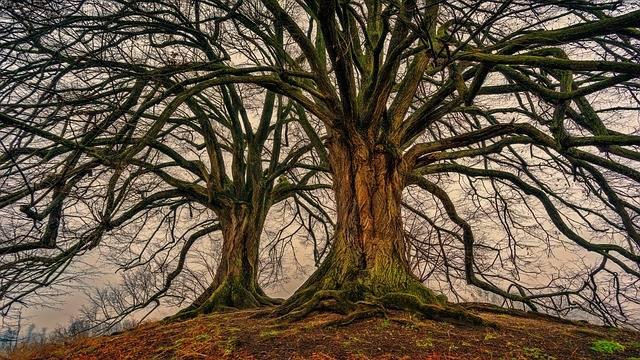 Tree Nature Wood - Free photo on Pixabay (204851)
