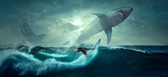 Hai Surfer Wave - Free photo on Pixabay (209320)
