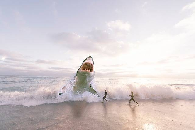 Shark Sea Ocean - Free photo on Pixabay (210660)