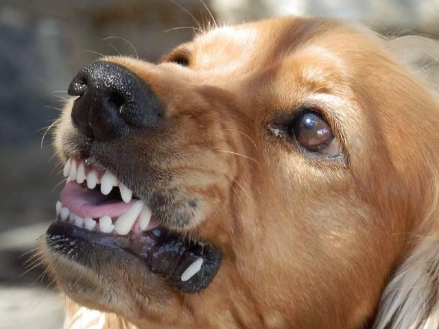 Dog Angry Aggressive - Free photo on Pixabay (212306)