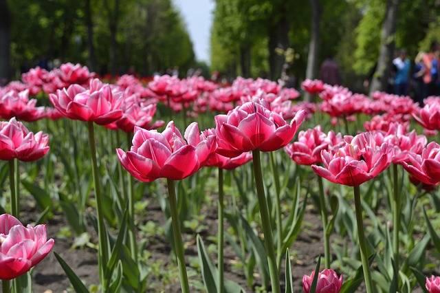 Flowers Kirovograd Ukraine - Free photo on Pixabay (213092)