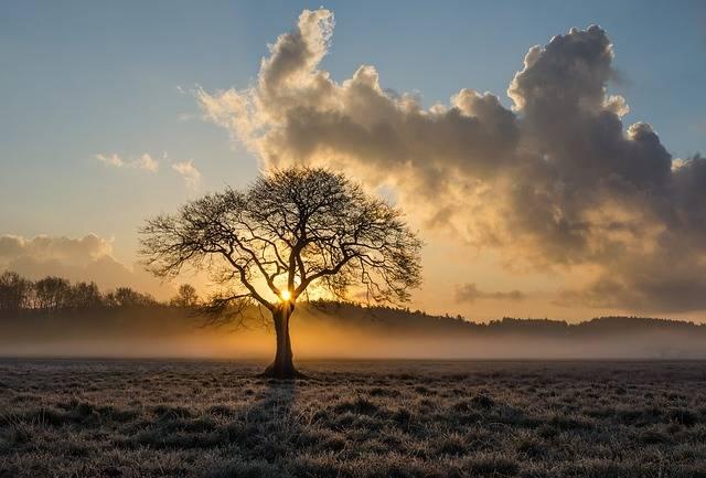 Lone Tree Oak - Free photo on Pixabay (213741)