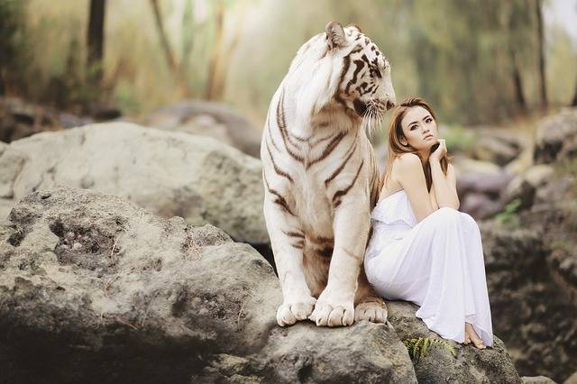 Nature Animal World White Bengal - Free photo on Pixabay (217599)