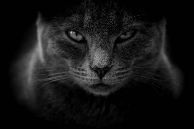 Cat Moody Angry Close - Free photo on Pixabay (219474)